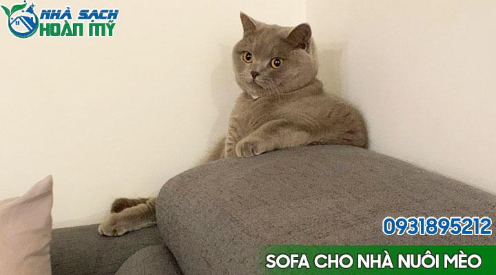 Lựa chọn ghế sofa phù hợp với nhà nuôi mèo
